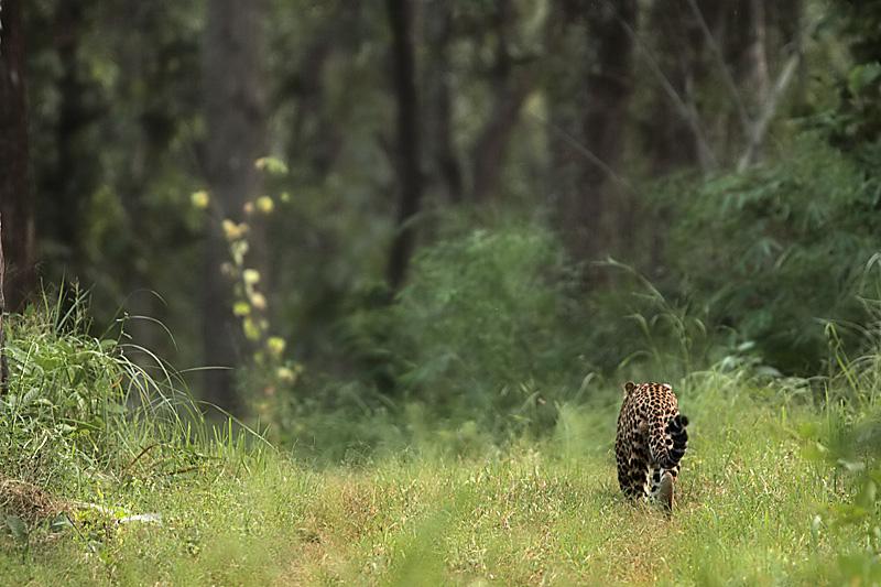 human wildlife conflict case studies