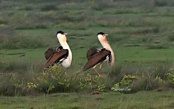 important bird area india