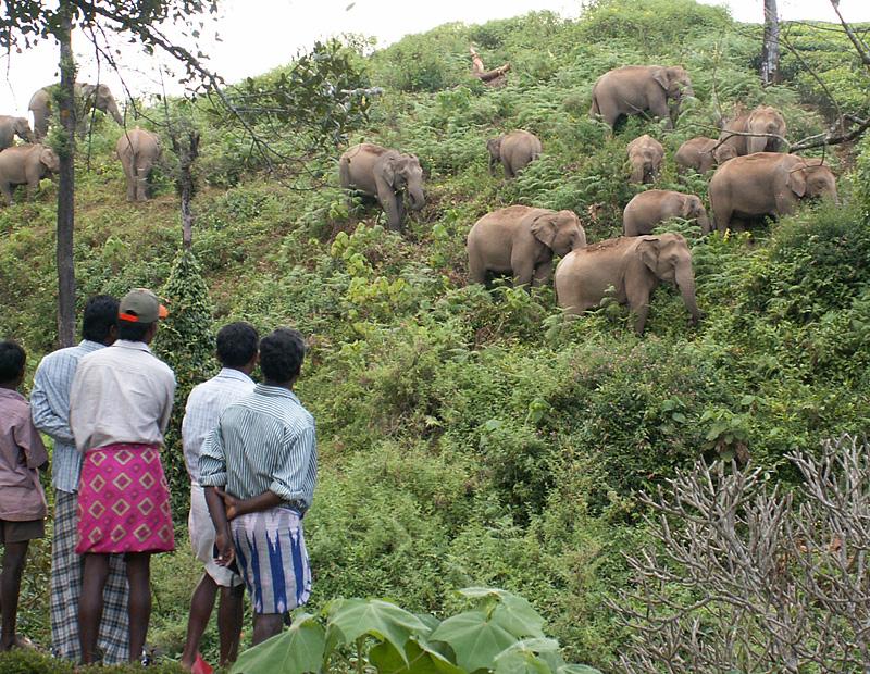 Valparai India  city photos gallery : ... for Elephant Corridors in Valparai Plateau   Conservation India