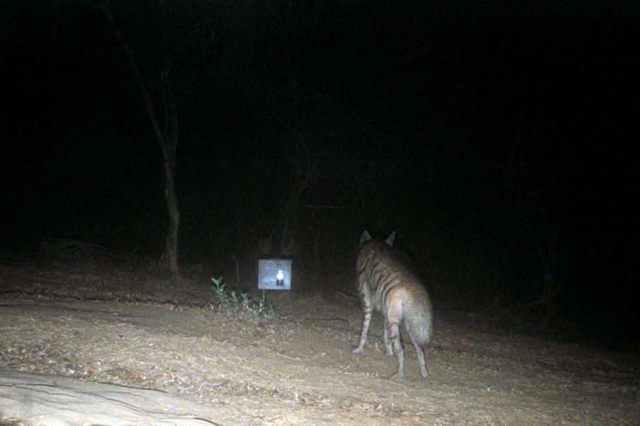 last tiger reserve