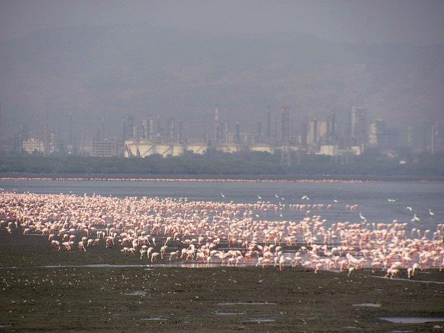 Flam-Sewri-CI