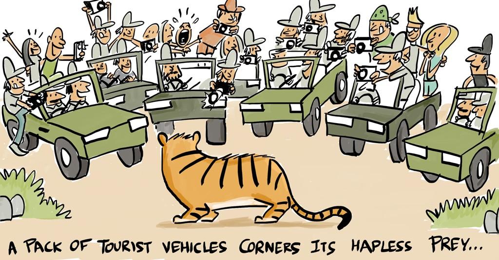 tiger tourism-hapless